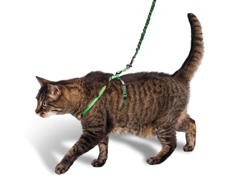 шлейка-для-кошки