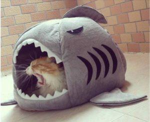 дом для кошки акула