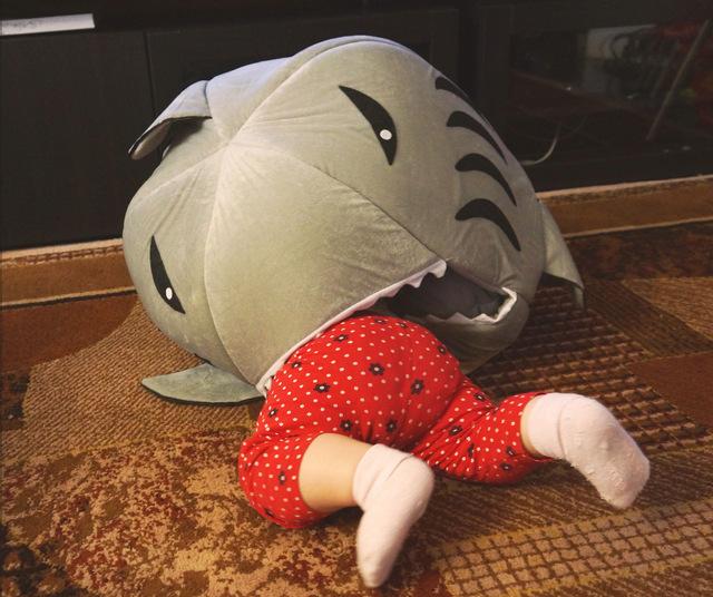 дом акула